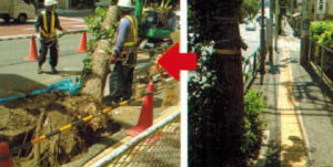 街路樹撤去の様子