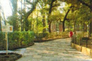 大塚公園園内道路